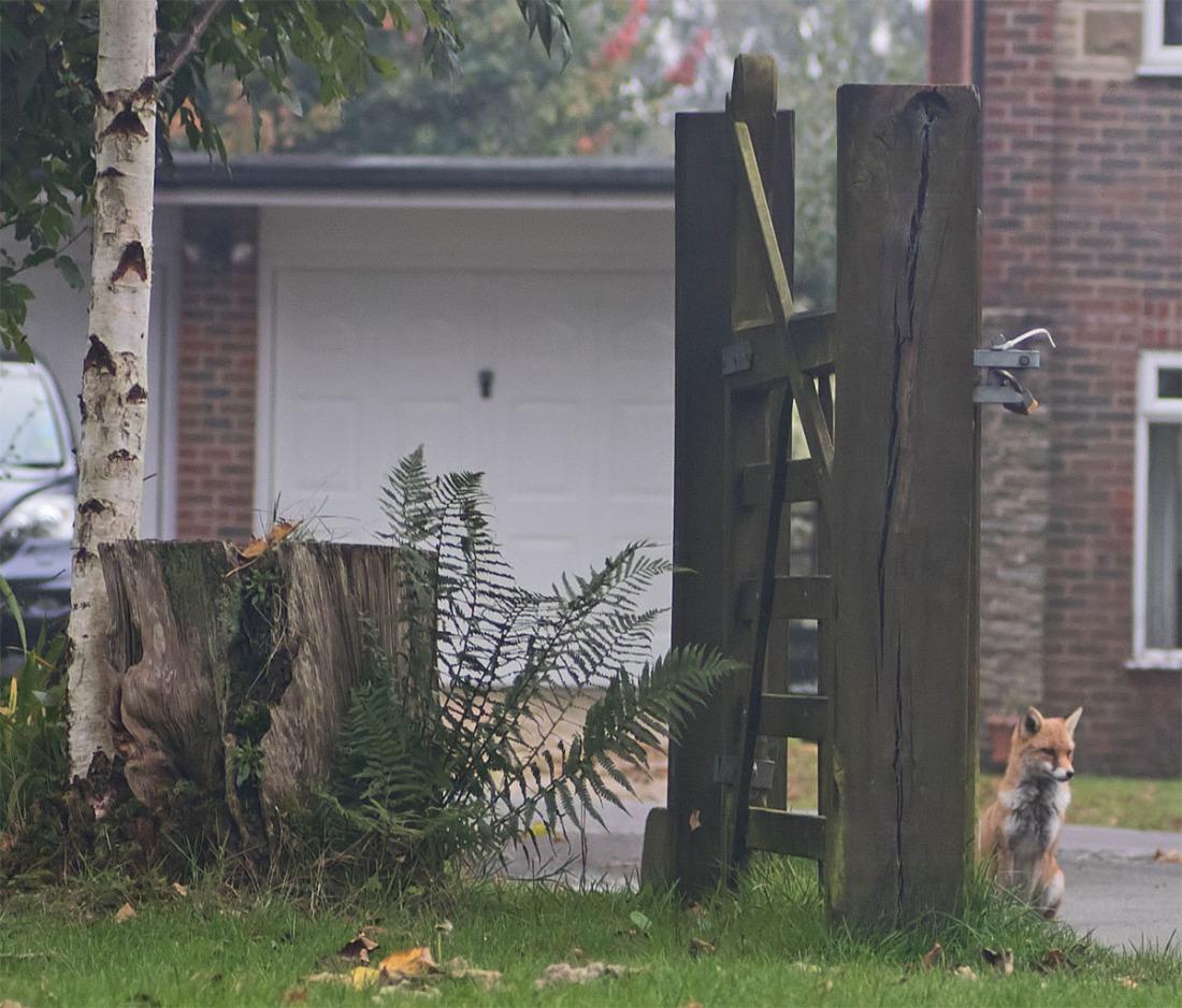 Fox Gatekeeper 25 Sept 2017