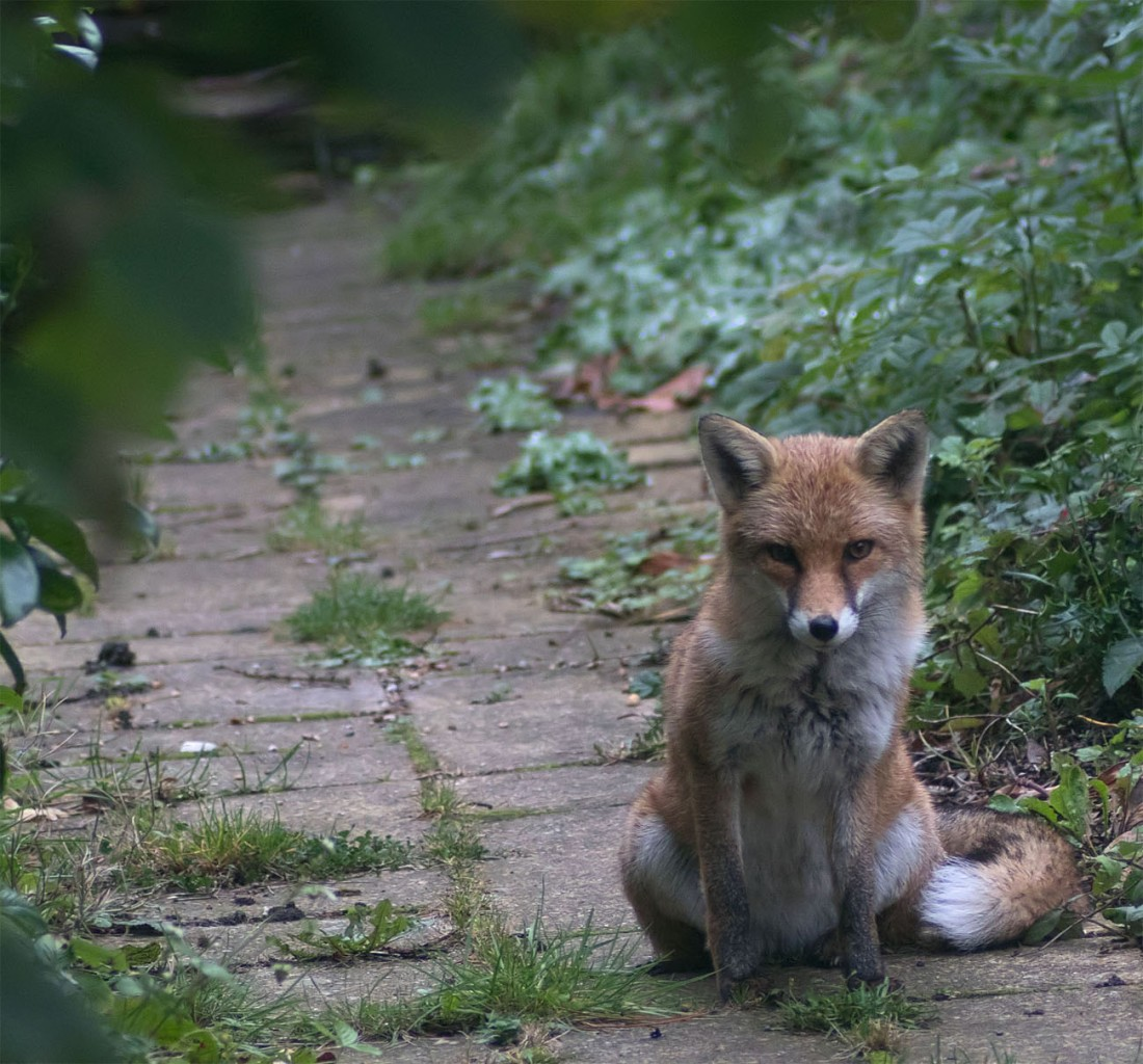 Fox Gatekeeper2 25 Sept 2017