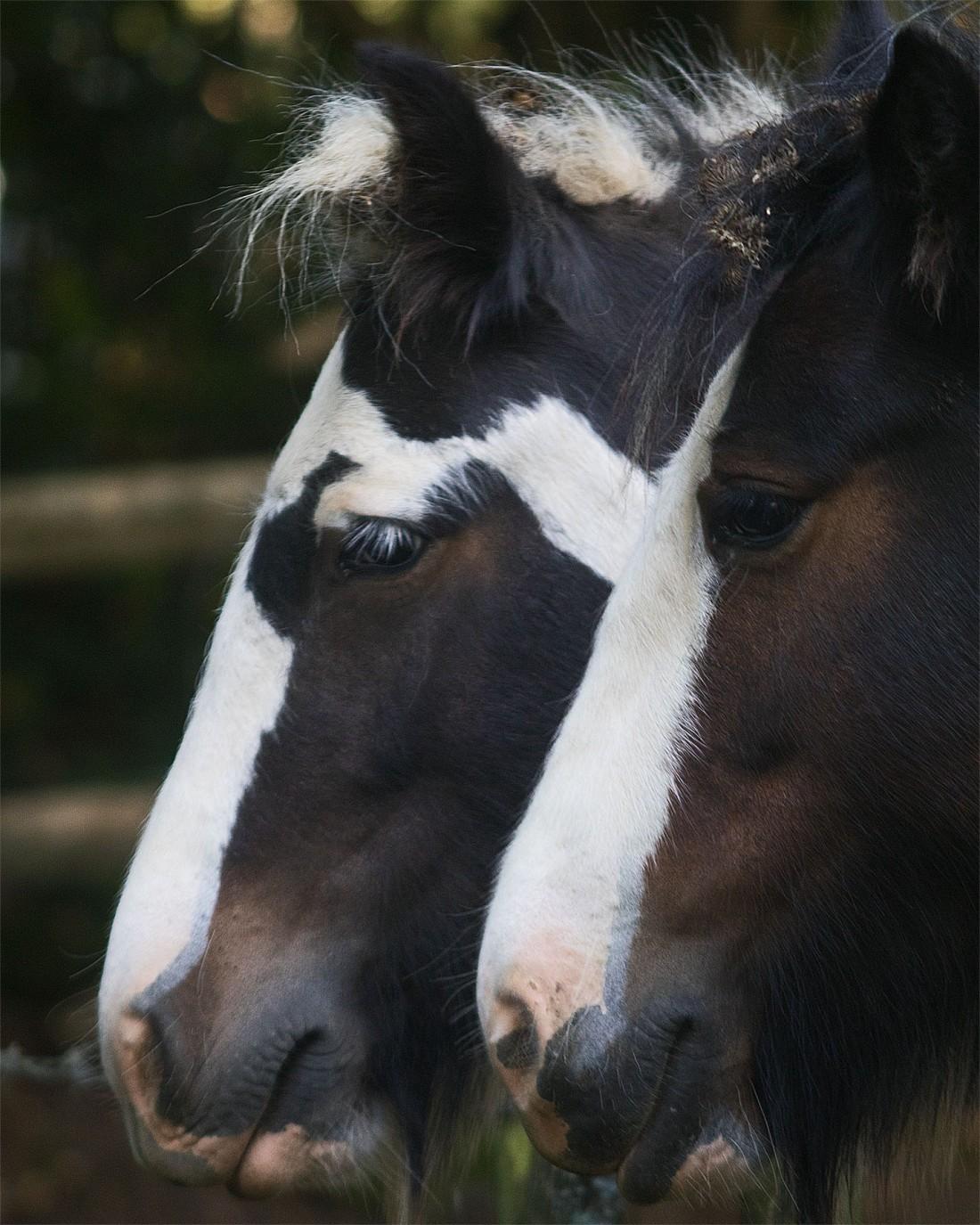 Horses2 24 Sept 2017