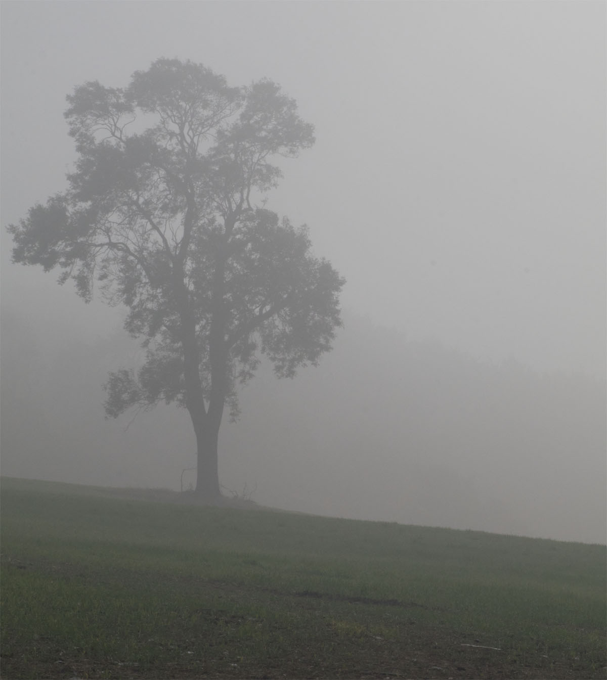 Tree in the mist 27 Sept 2017