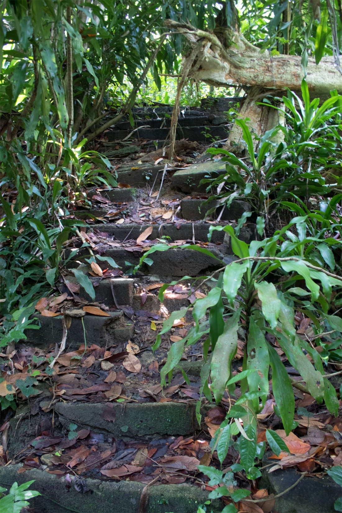 Bukit Timah path SG Mar 2017