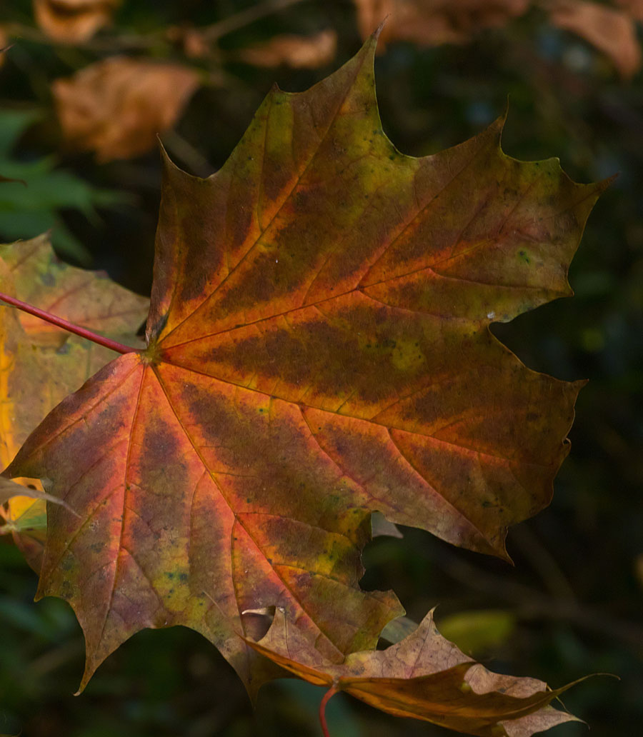 Leaf 16 Oct 2017