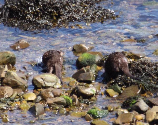 Otters 2