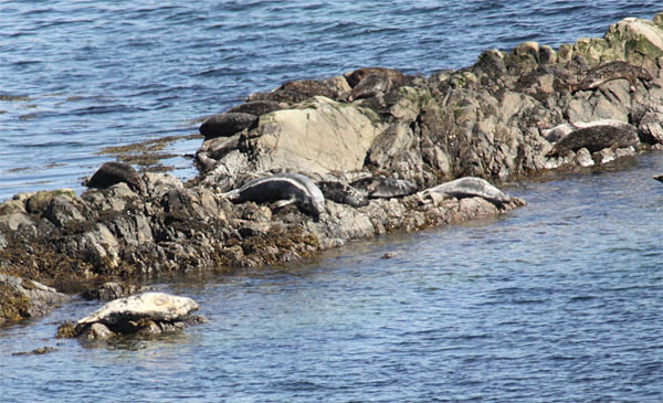 Seal rock2