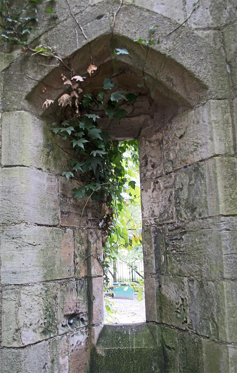 Walls ivy