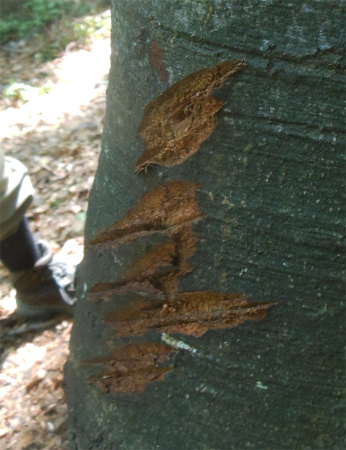 Bear scratch marks 270616
