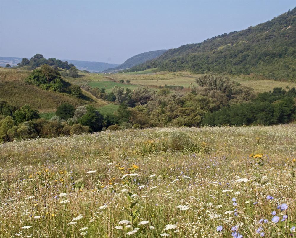 Meadows at Daia2