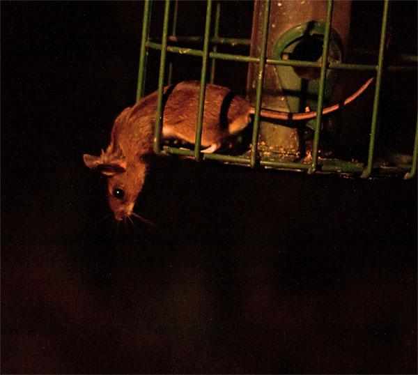 YN mouse 150406