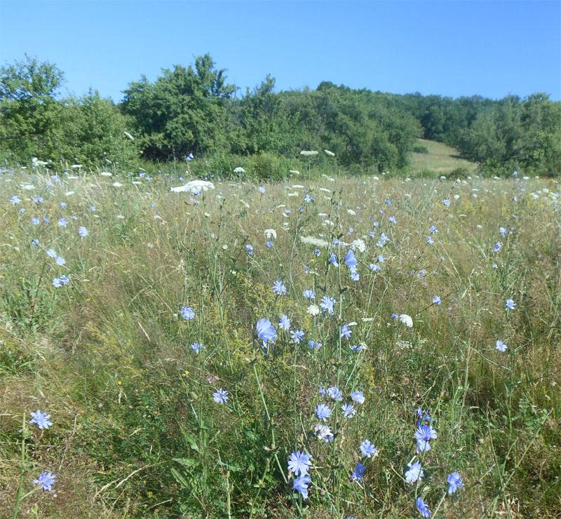 Beekeeper meadow