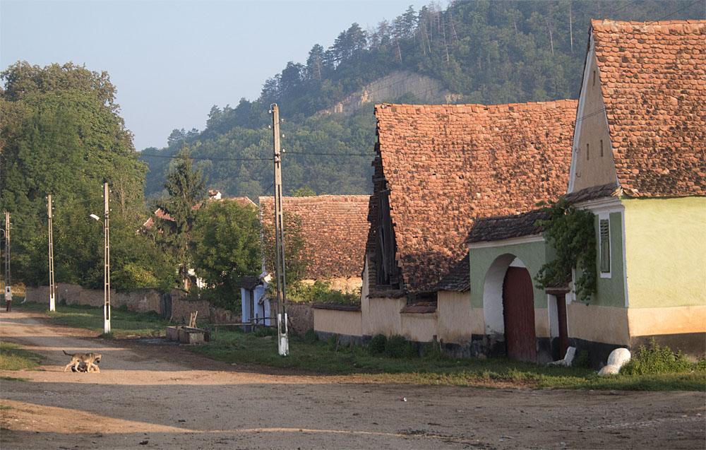 Daia streets4