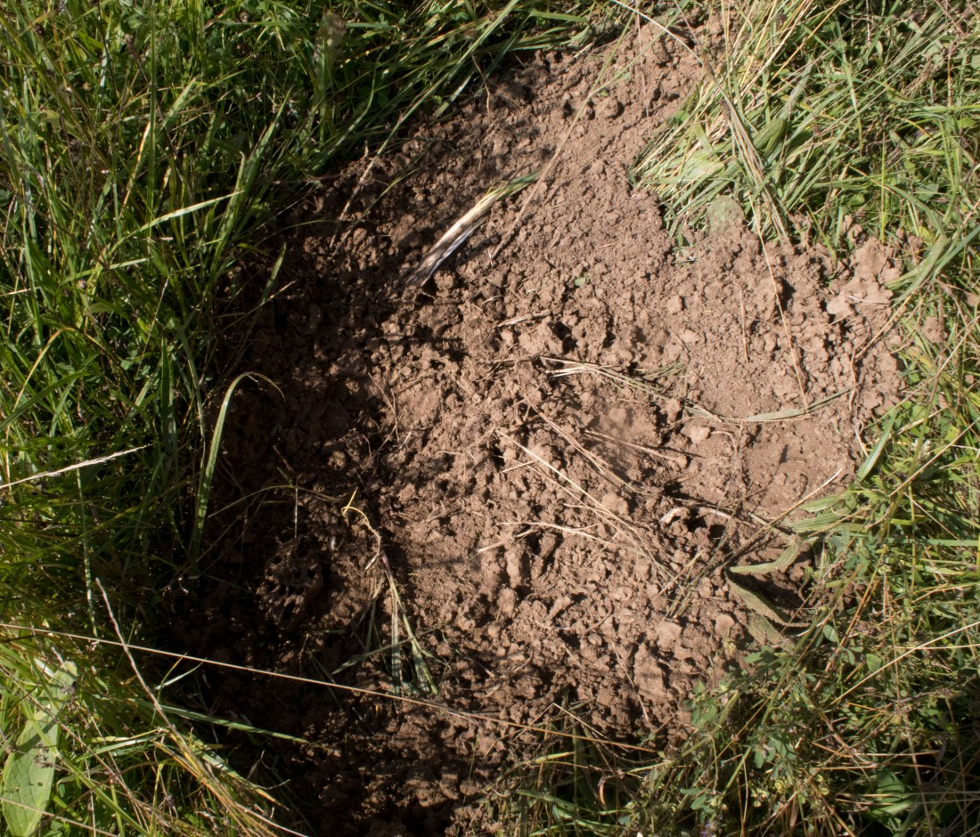 Dug up anthill.jpg