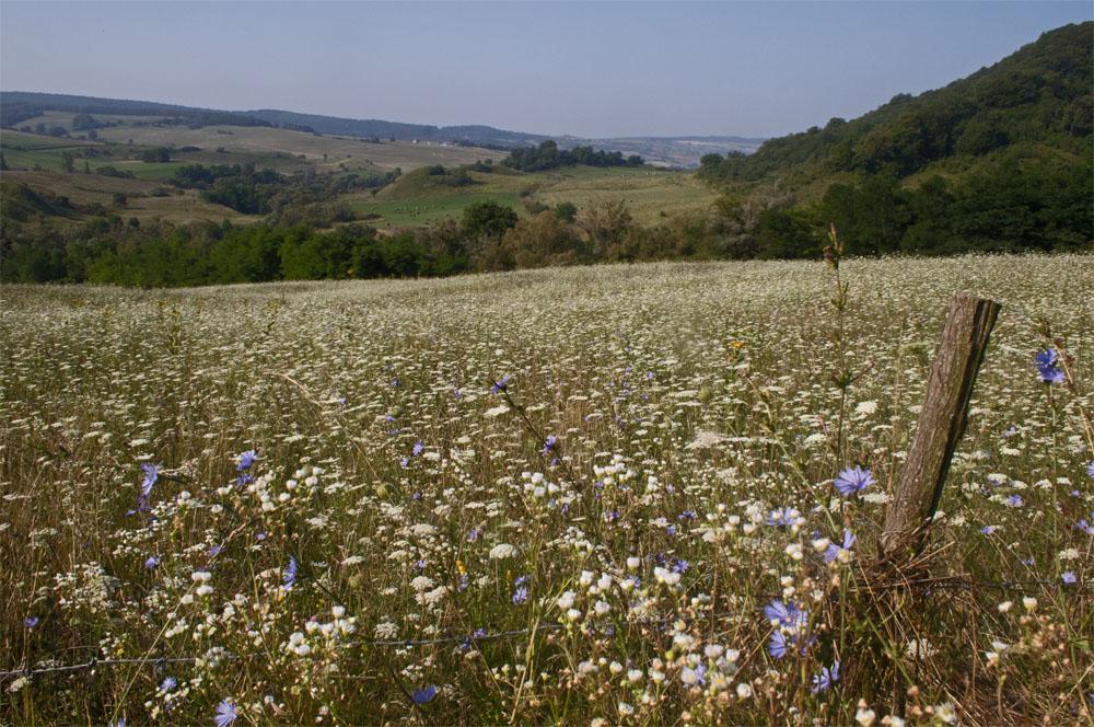 Meadows at Daia
