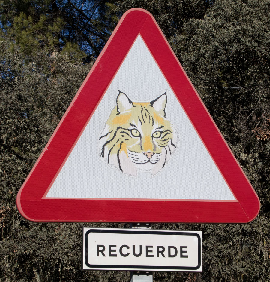 Pardal lynx sign