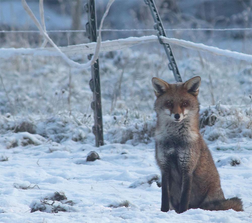 Fox 28 Feb 2018