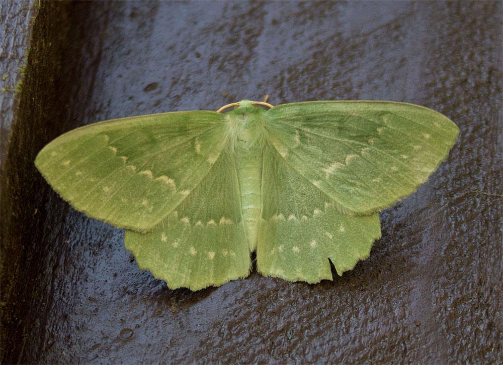 Emerald Dorset 10 Jul 2018