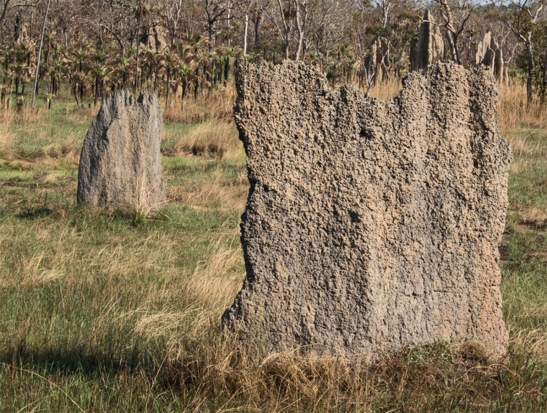 Termite mounds1