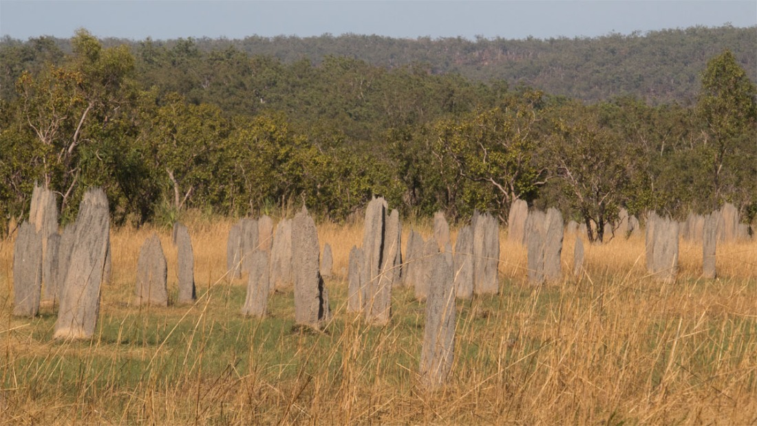 Termite mounds3