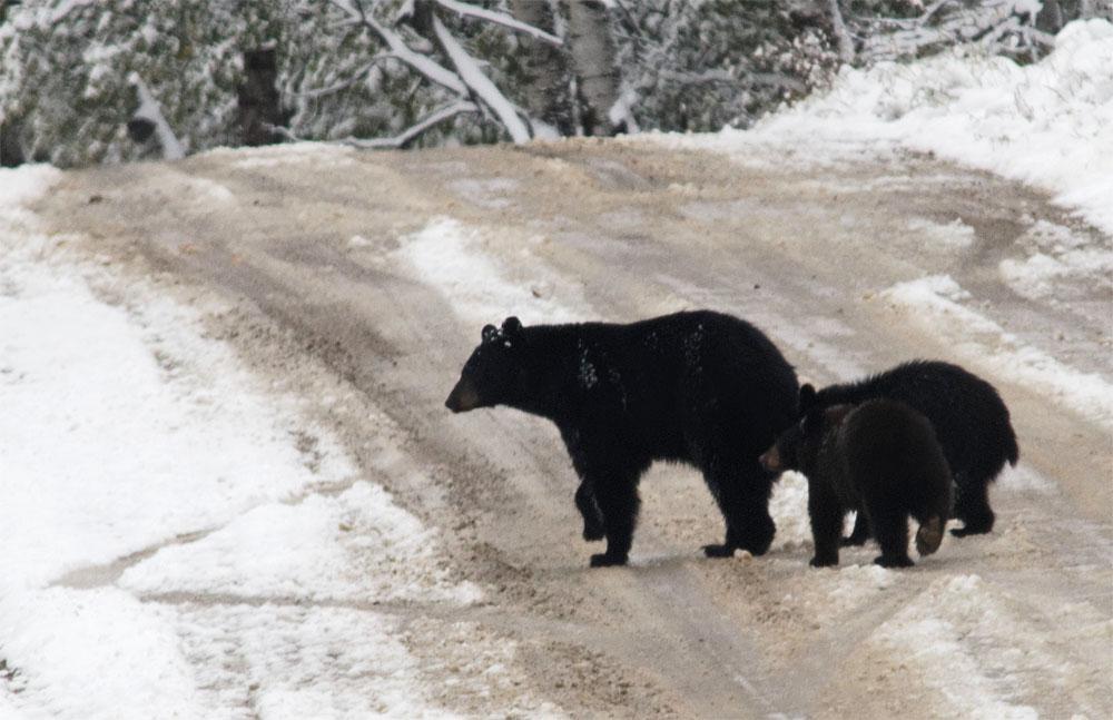 Bears3 Sept 18
