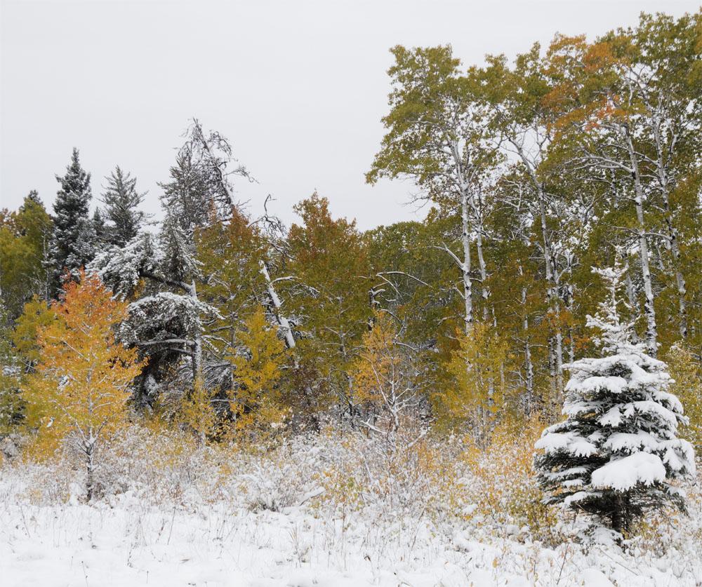RMNP snow4