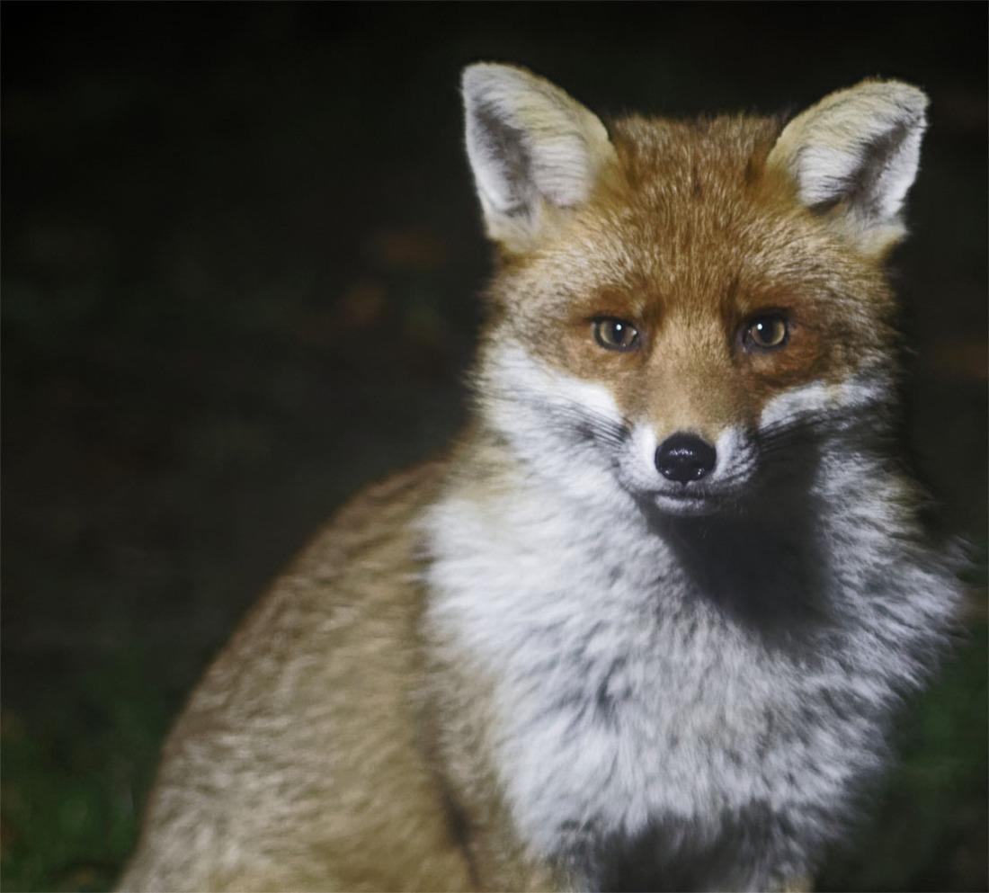 fox dun rival 23 jan 19