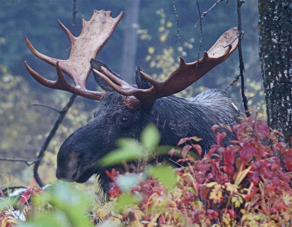 moose4 24 sept 2018