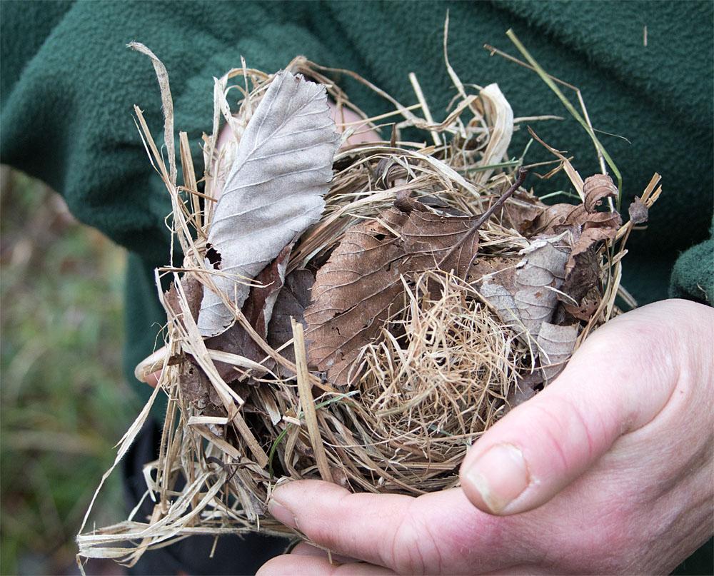 Dormouse nest 28 Nov 2017