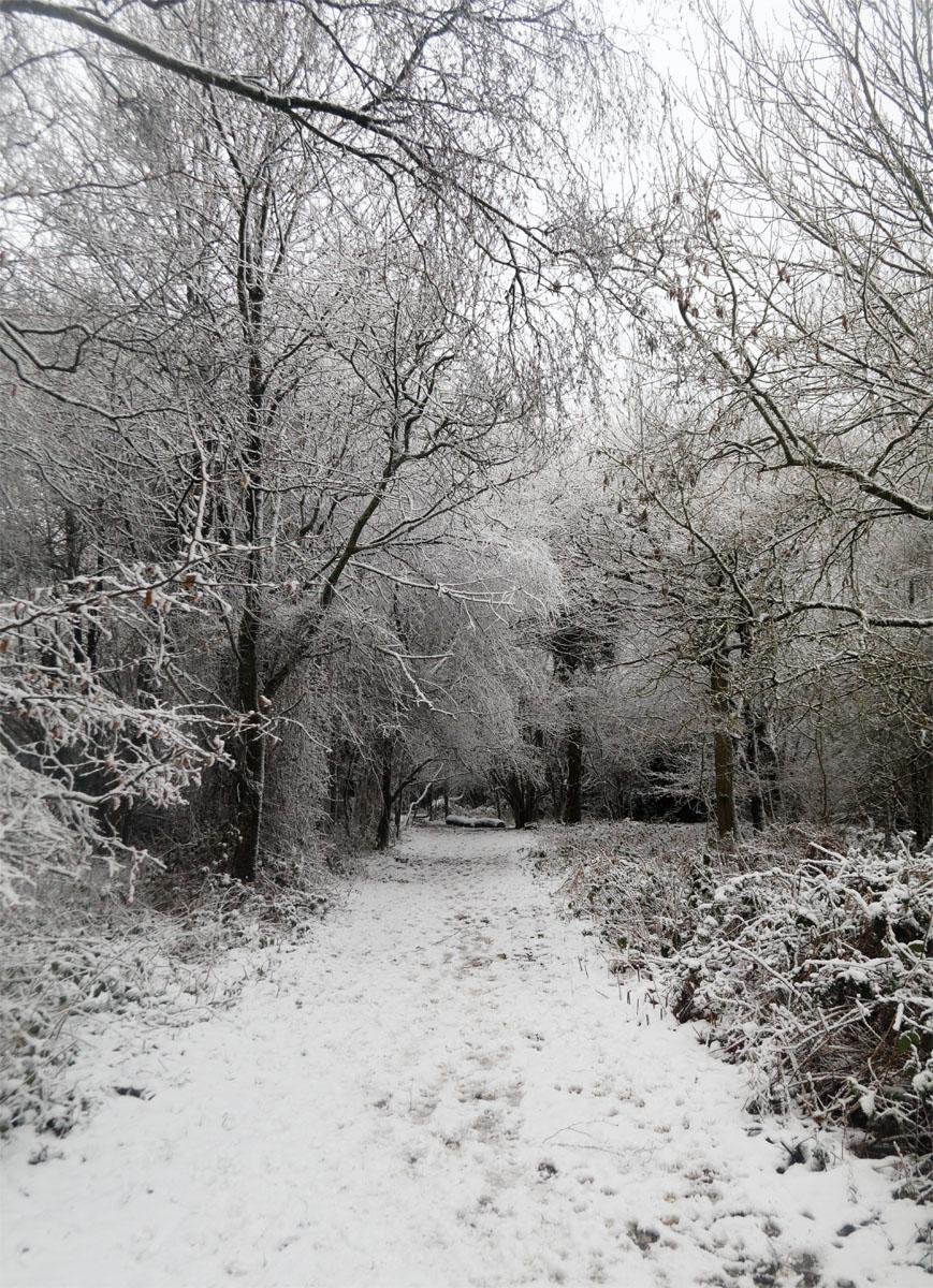 Snowy winter Jan 19