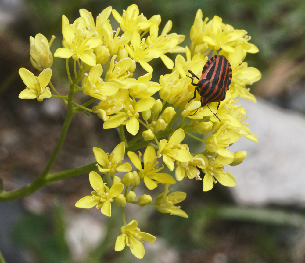 Bug on flowers CH Jun 19