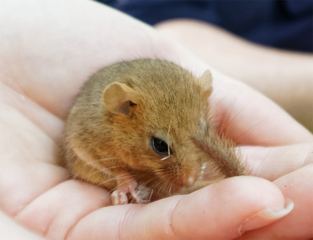 Dormouse 25 May 19