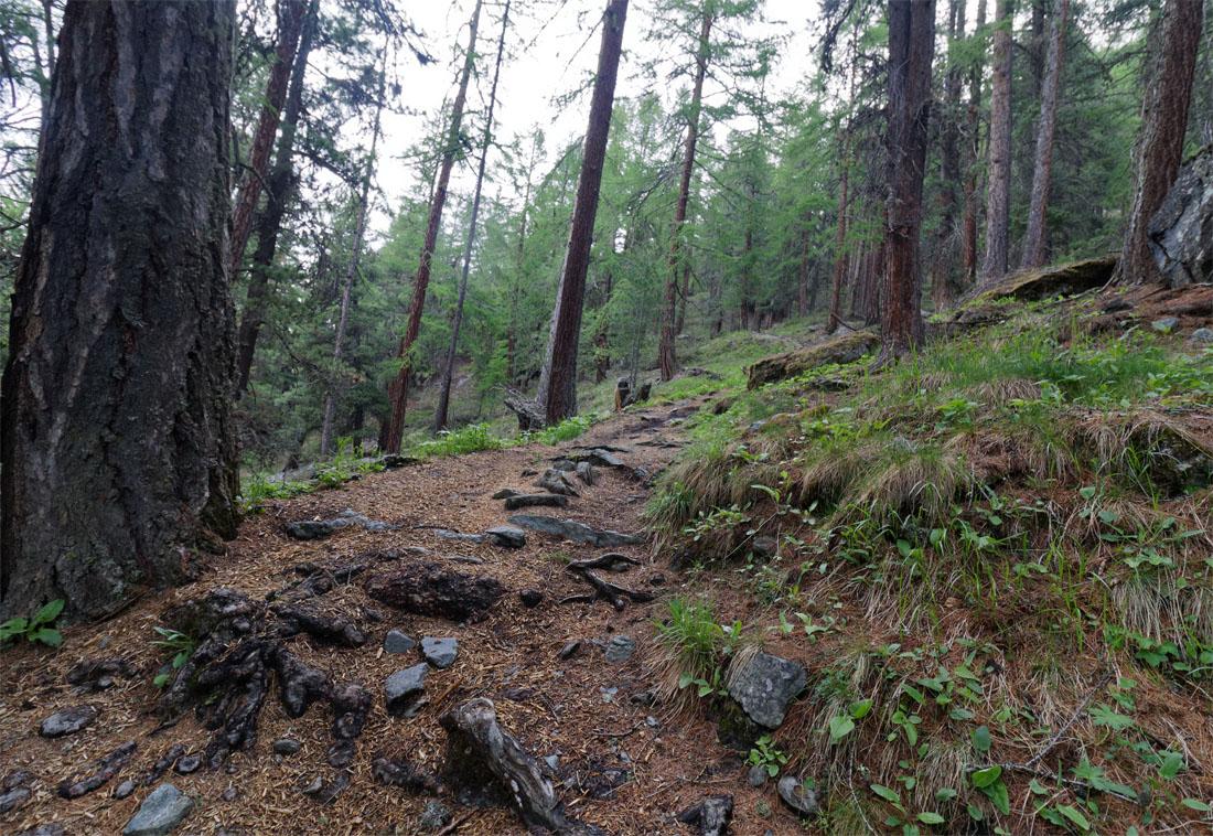 Forest CH Jun 19