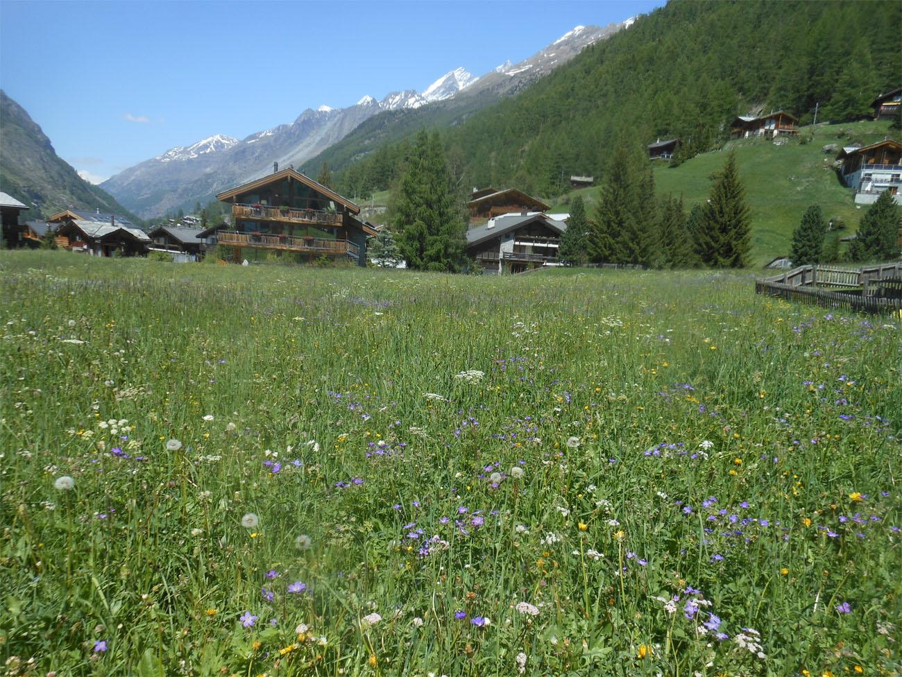 Zermatt meadows1