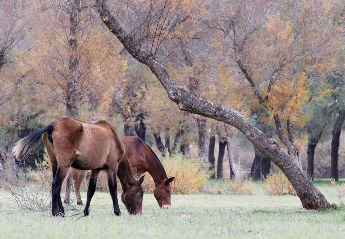 Donana horses Dec 19