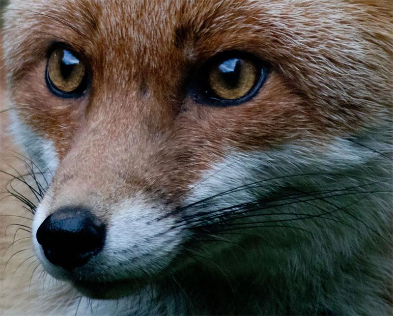Fox PF2 160327