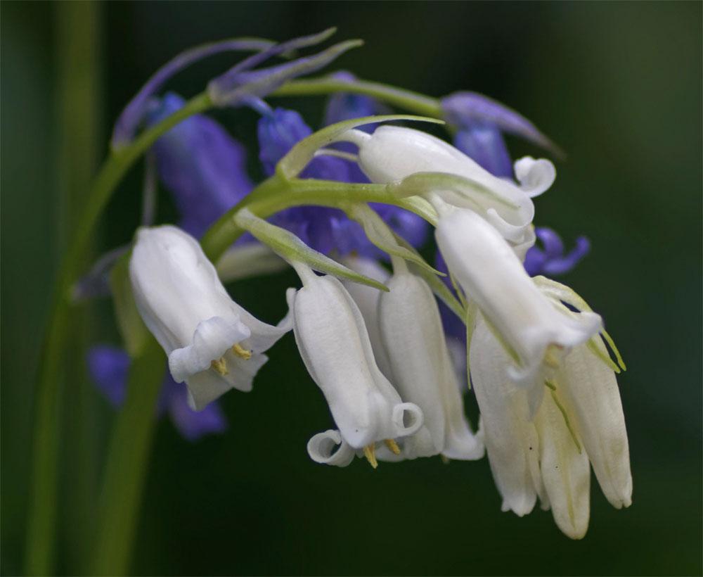 White on blue 25 Apr 20