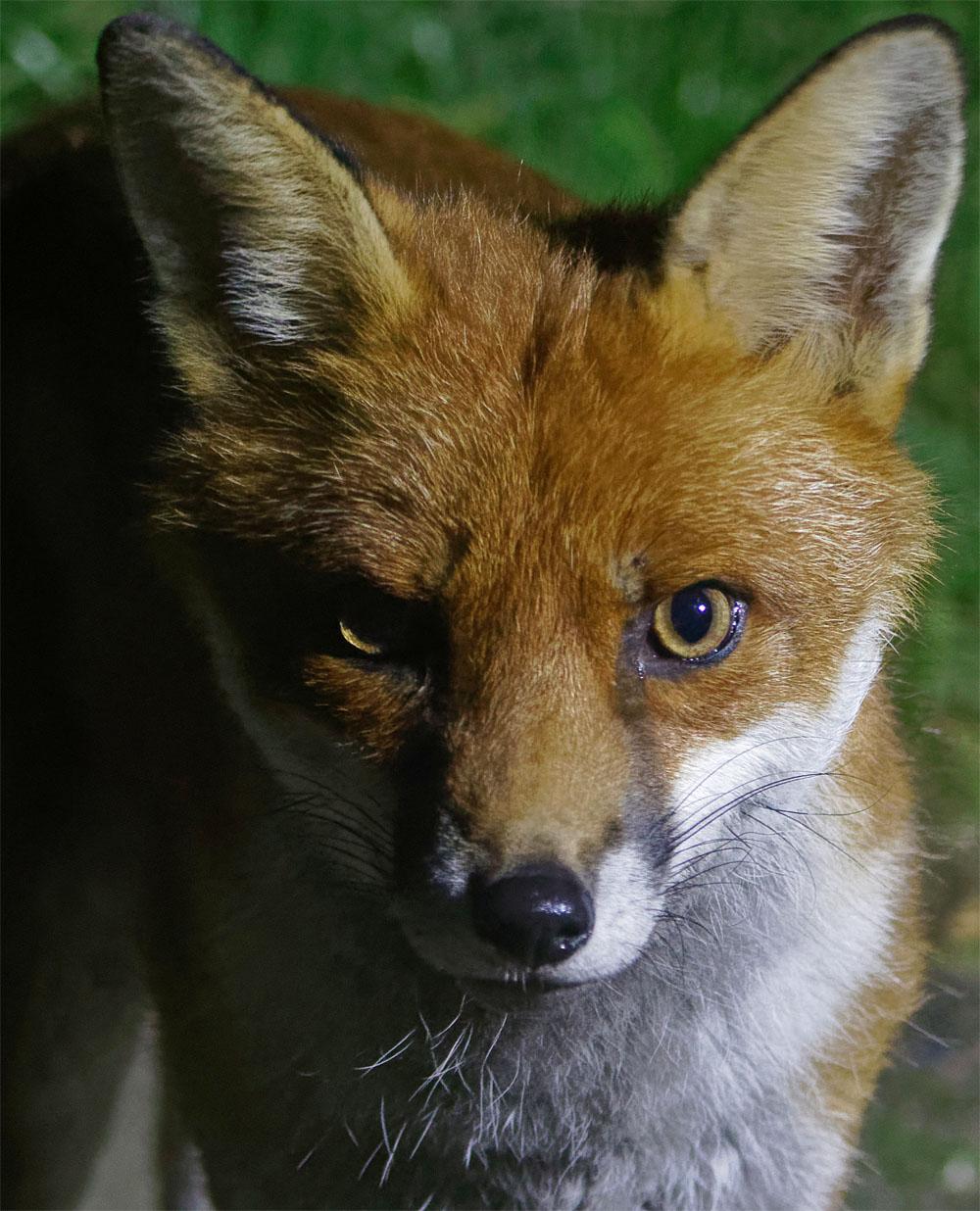 Fox intense 22 Aug 20
