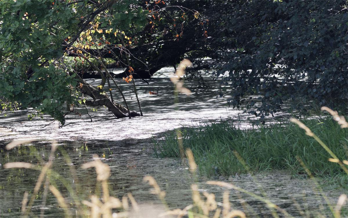 Pingo pond 29 Jul 21