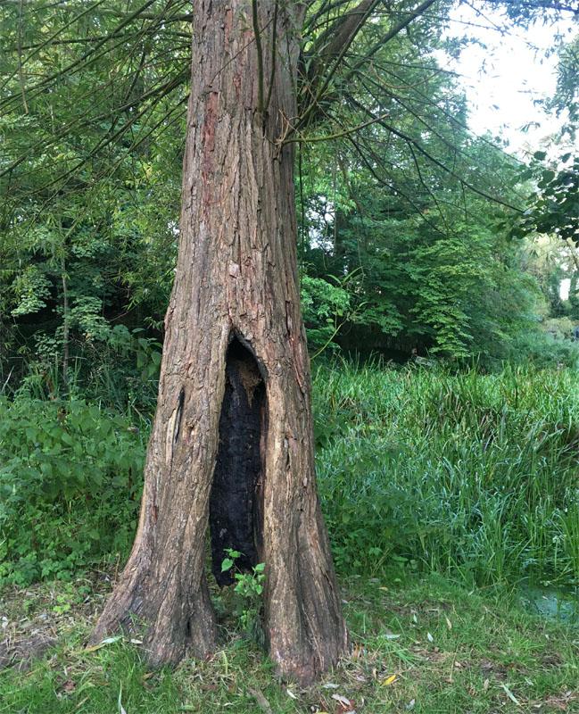 Crack willow3 4 Sept 21