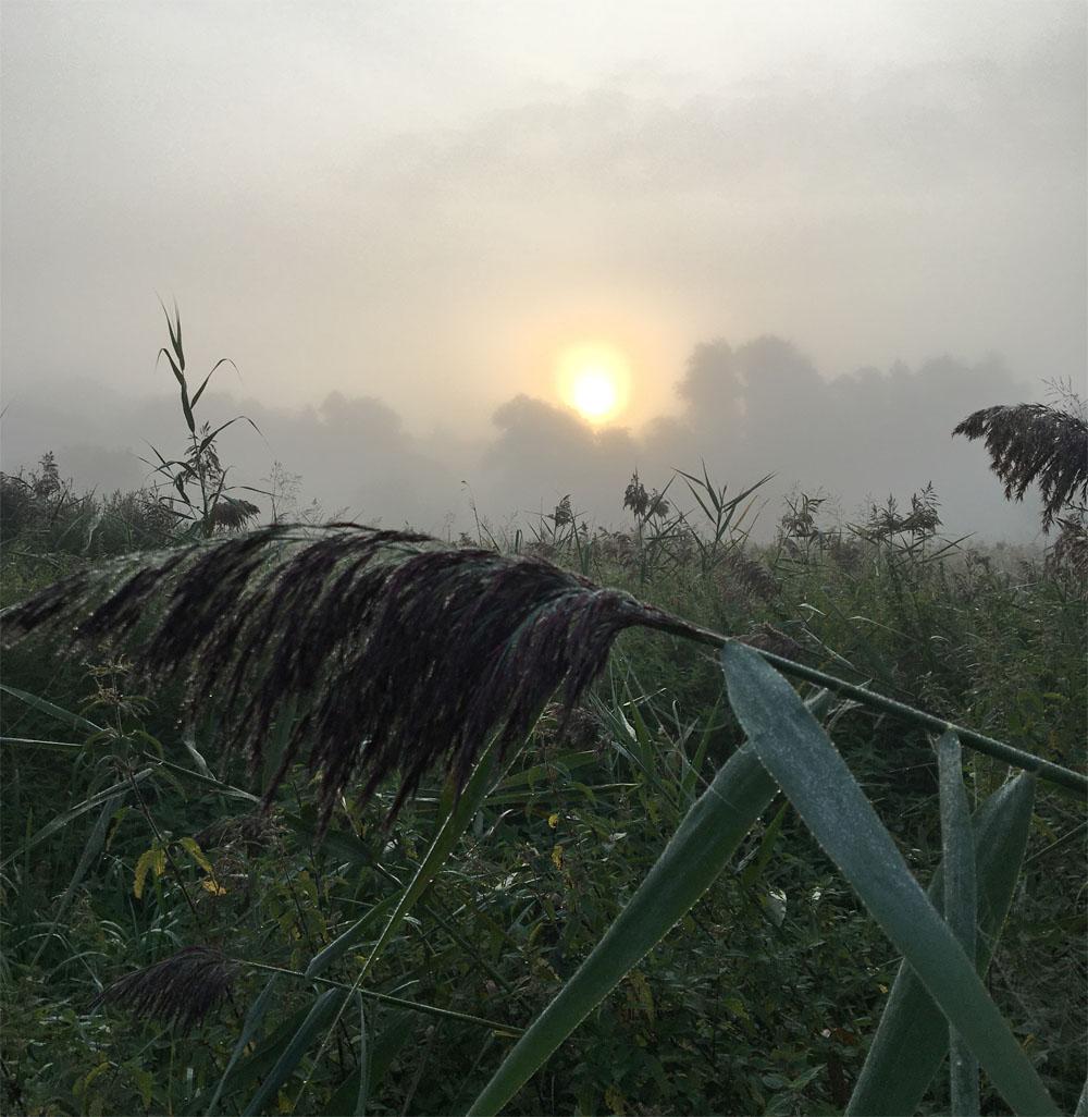Foggy dawn Aug 21