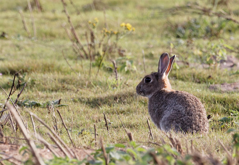 Rabbit1 18 Sept 21