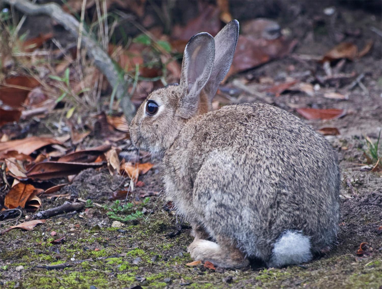 Rabbit1 Aug 21